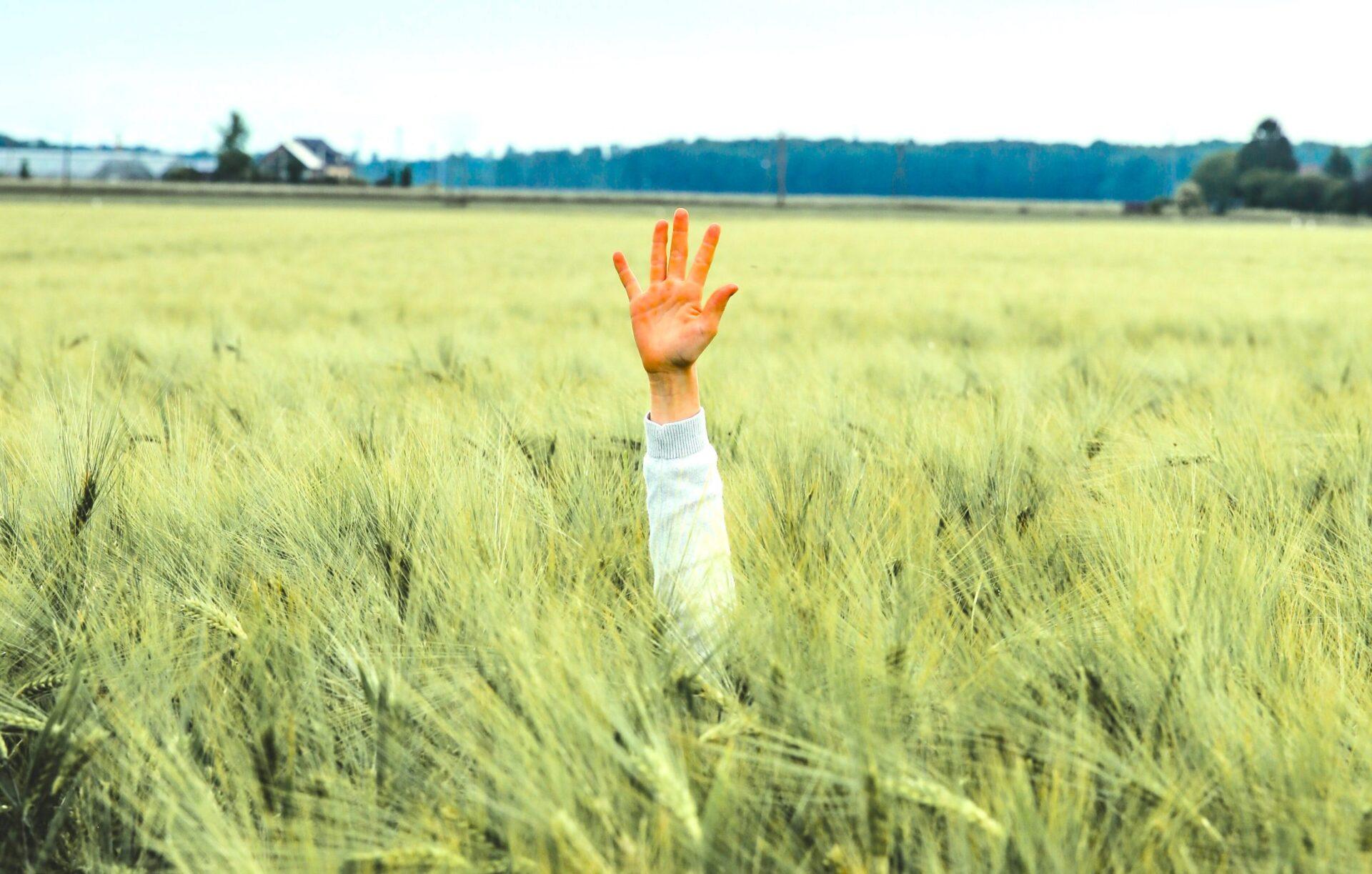 Hand showing five fingers in a field