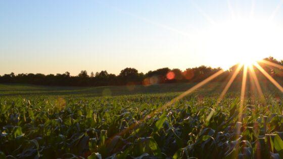 crops shine